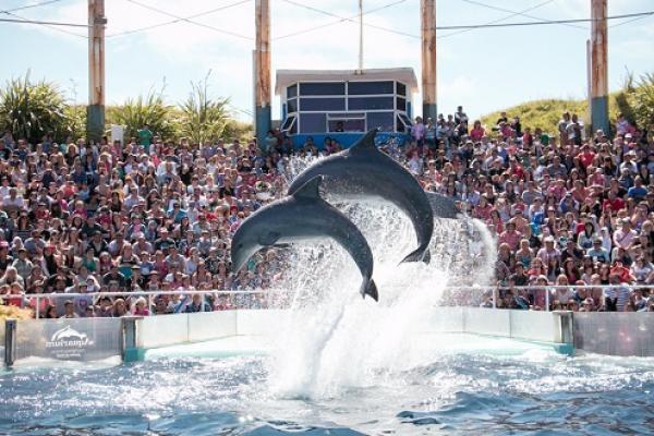 """""""Grupo Dolphin"""" Continúa su expansión, ahora también en Argentina"""